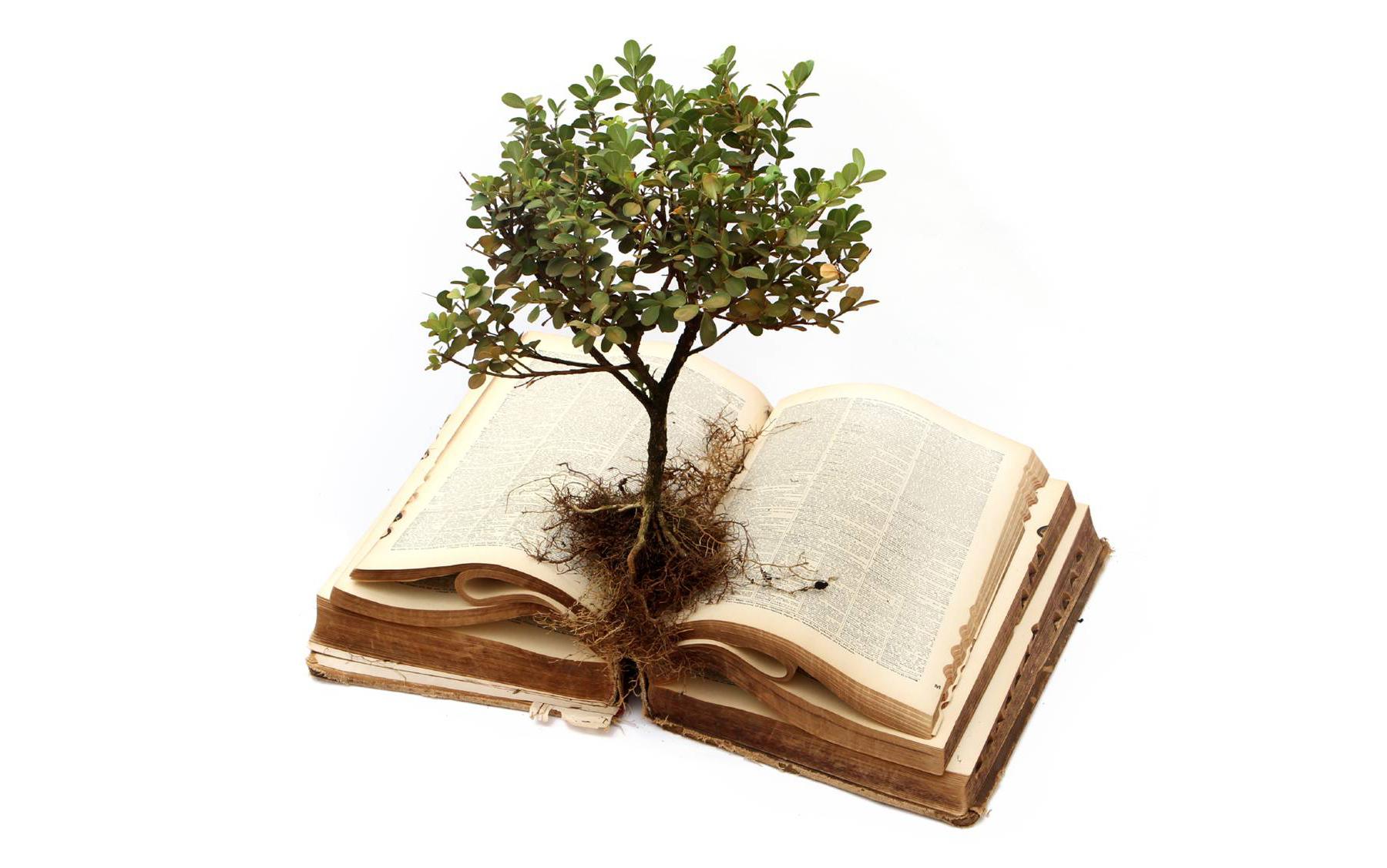 BibleStudyImage